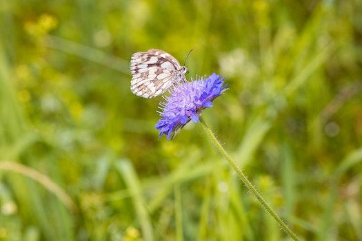 Free stock photo of nature, field, grass, blur