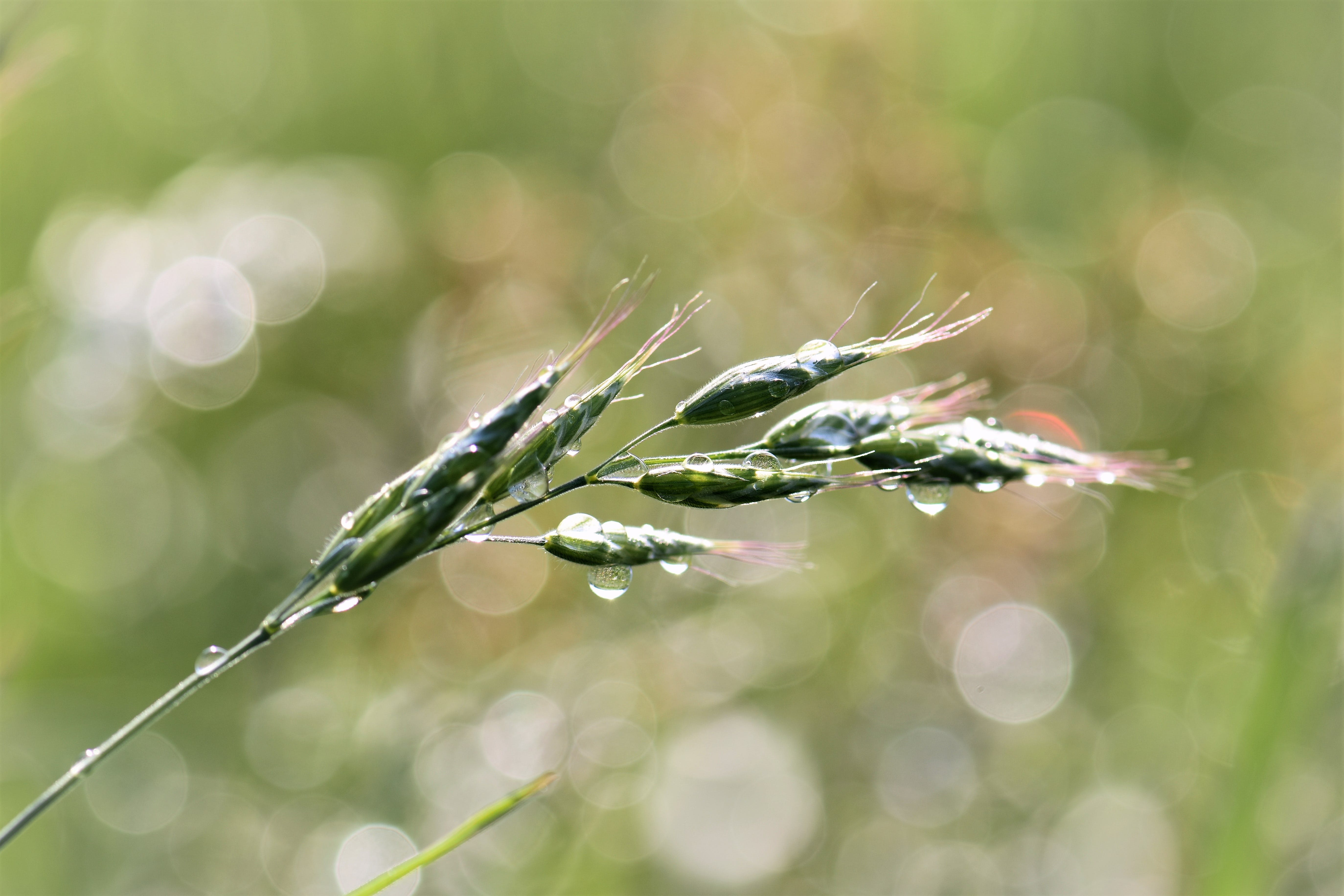 blade of grass, blur, bokeh