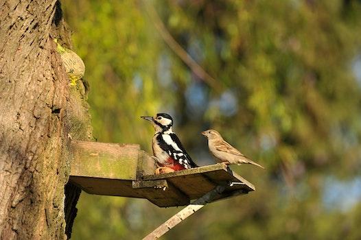 Free stock photo of nature, bird, garden, animal