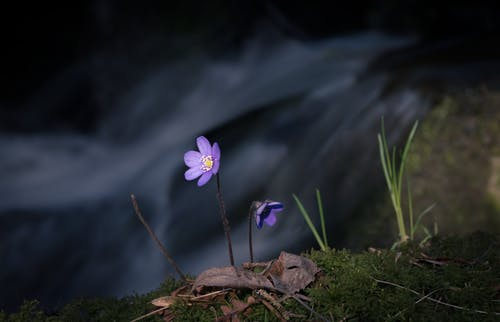 꽃, 꽃이 피는, 꽃잎, 물의 무료 스톡 사진
