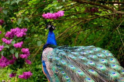 充滿活力, 公園, 動物, 動物園 的 免费素材照片