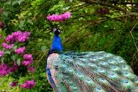 nature, bird, flowers