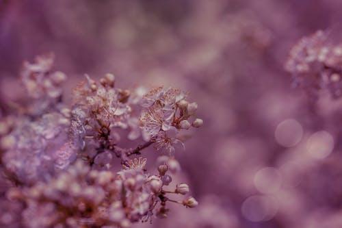 Selective Focus of Purple Flowers