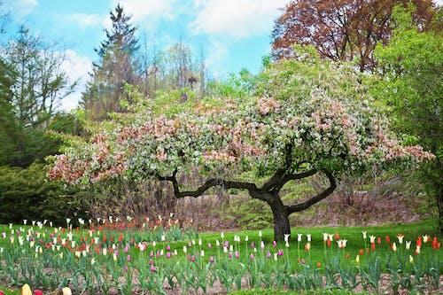 Foto stok gratis alam, awan, berbunga, berkembang