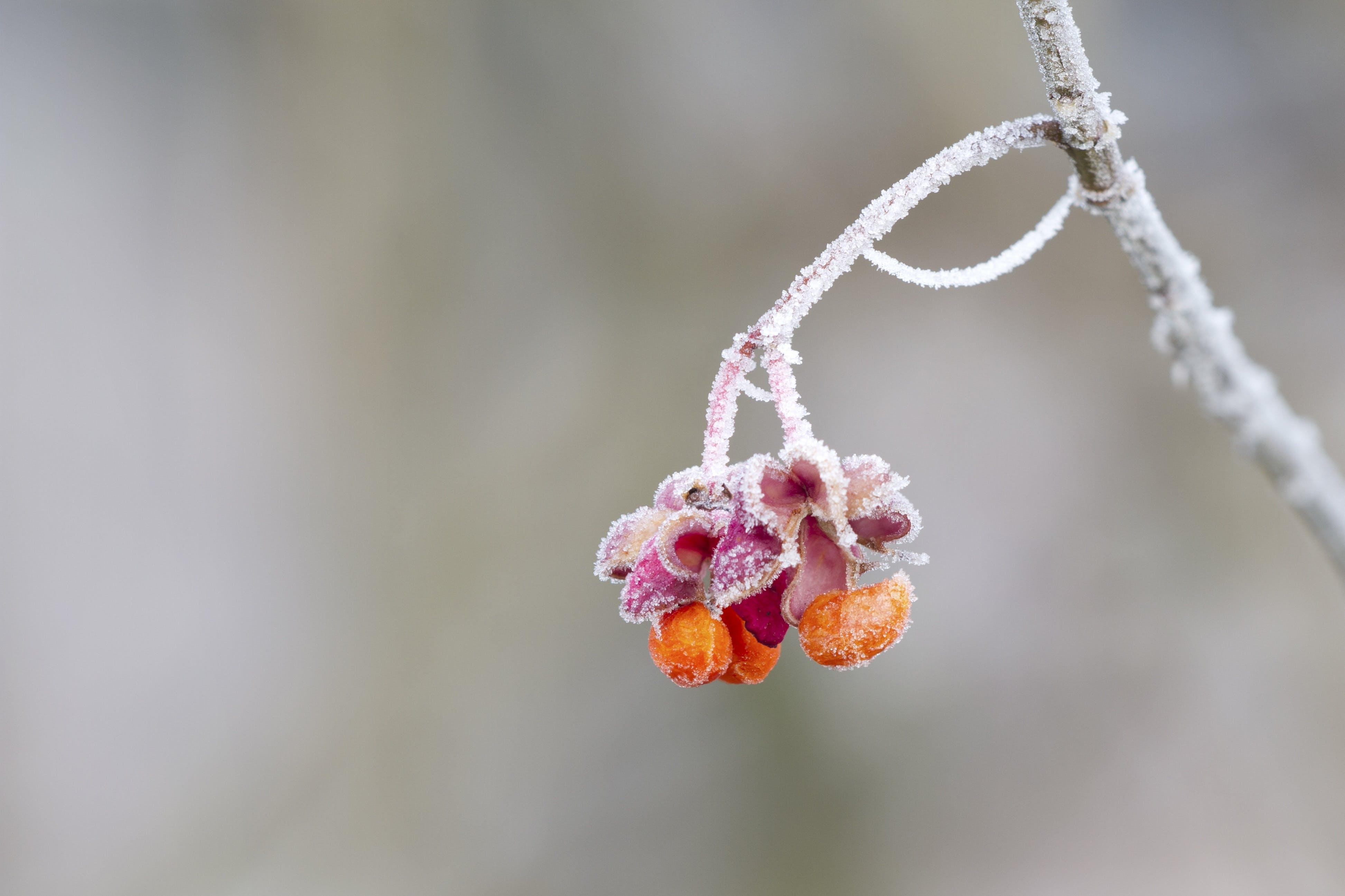 Purple and Orange Flower