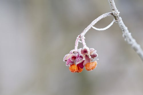 คลังภาพถ่ายฟรี ของ กลีบดอก, การเจริญเติบโต, ดอกไม้, ธรรมชาติ