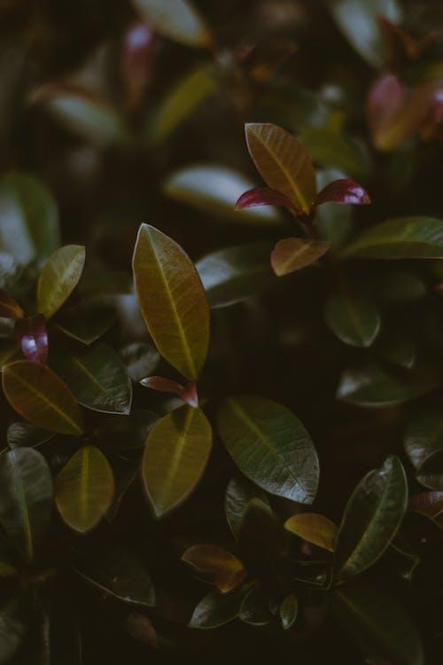 Photos gratuites de à base de plantes, arbuste, arrière-plan, bio