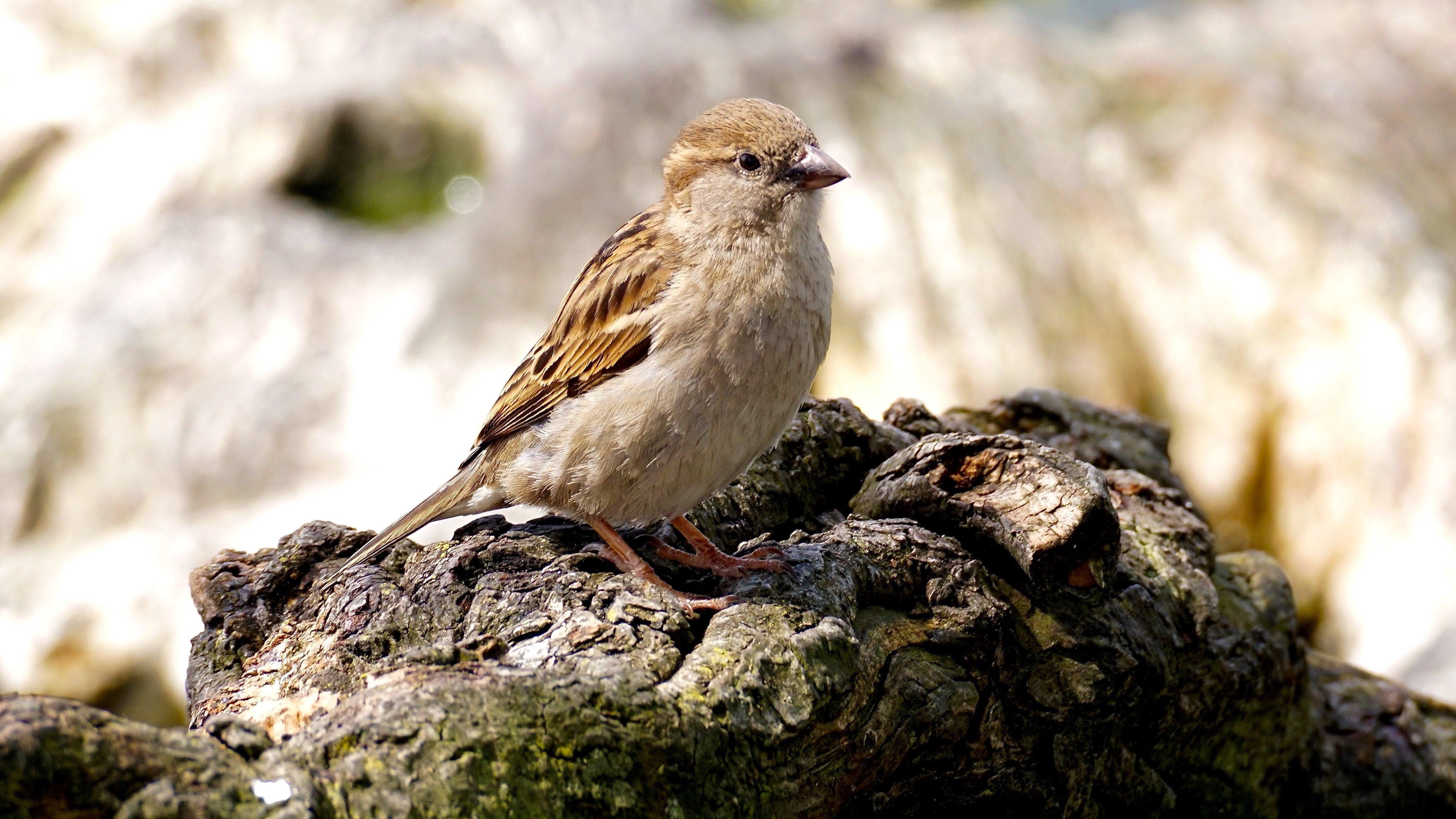 Selective Focus Photo of Brown Bird