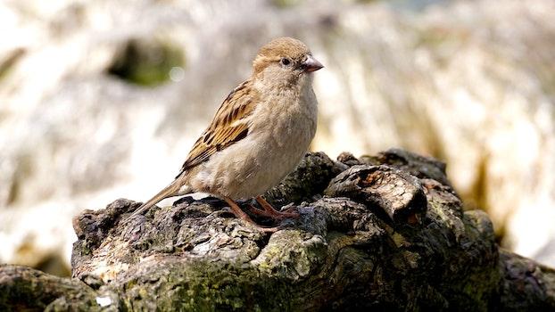 Free stock photo of bird, summer, rocks, animal