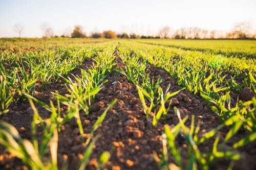 คลังภาพถ่ายฟรี ของ กลางแจ้ง, การเกษตร, การเจริญเติบโต, ชนบท