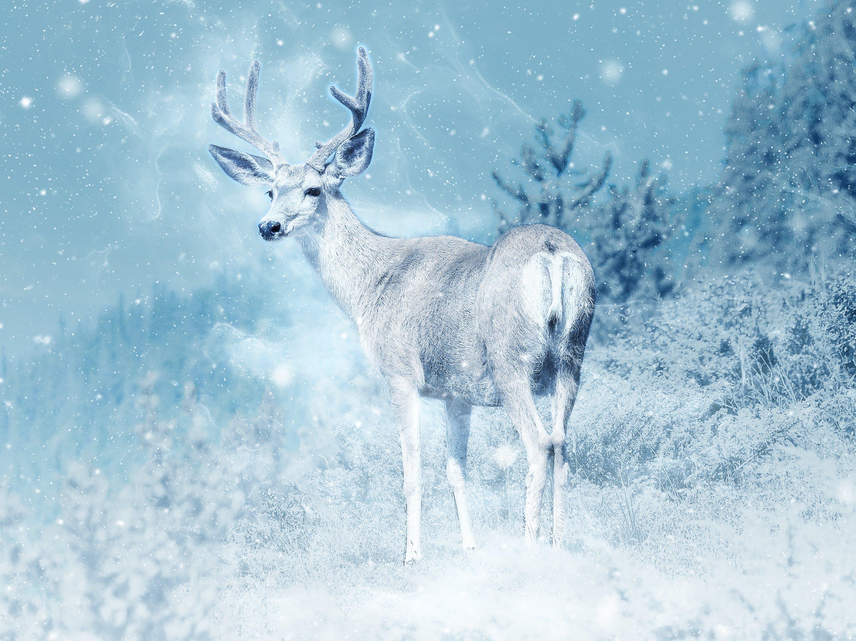 Free stock photo of snow, nature, art, animal