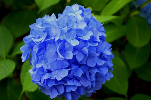 Free Stock Photo Of Nature Flowers Blue Summer