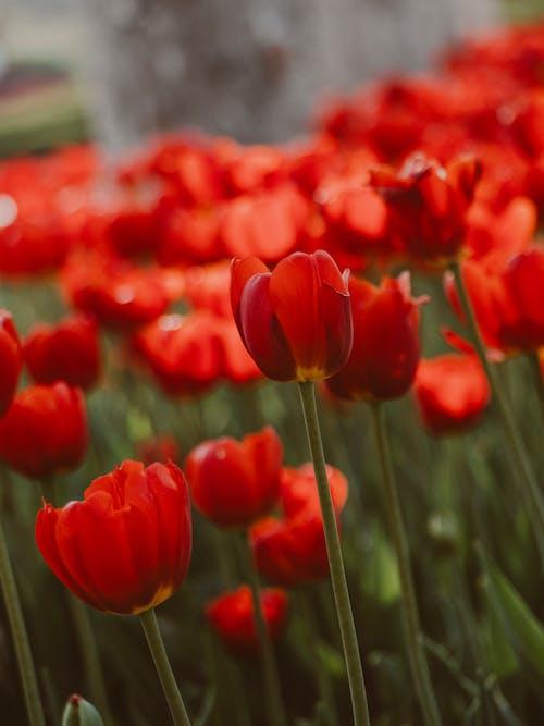 Fotos de stock gratuitas de amable, arbusto, armonía