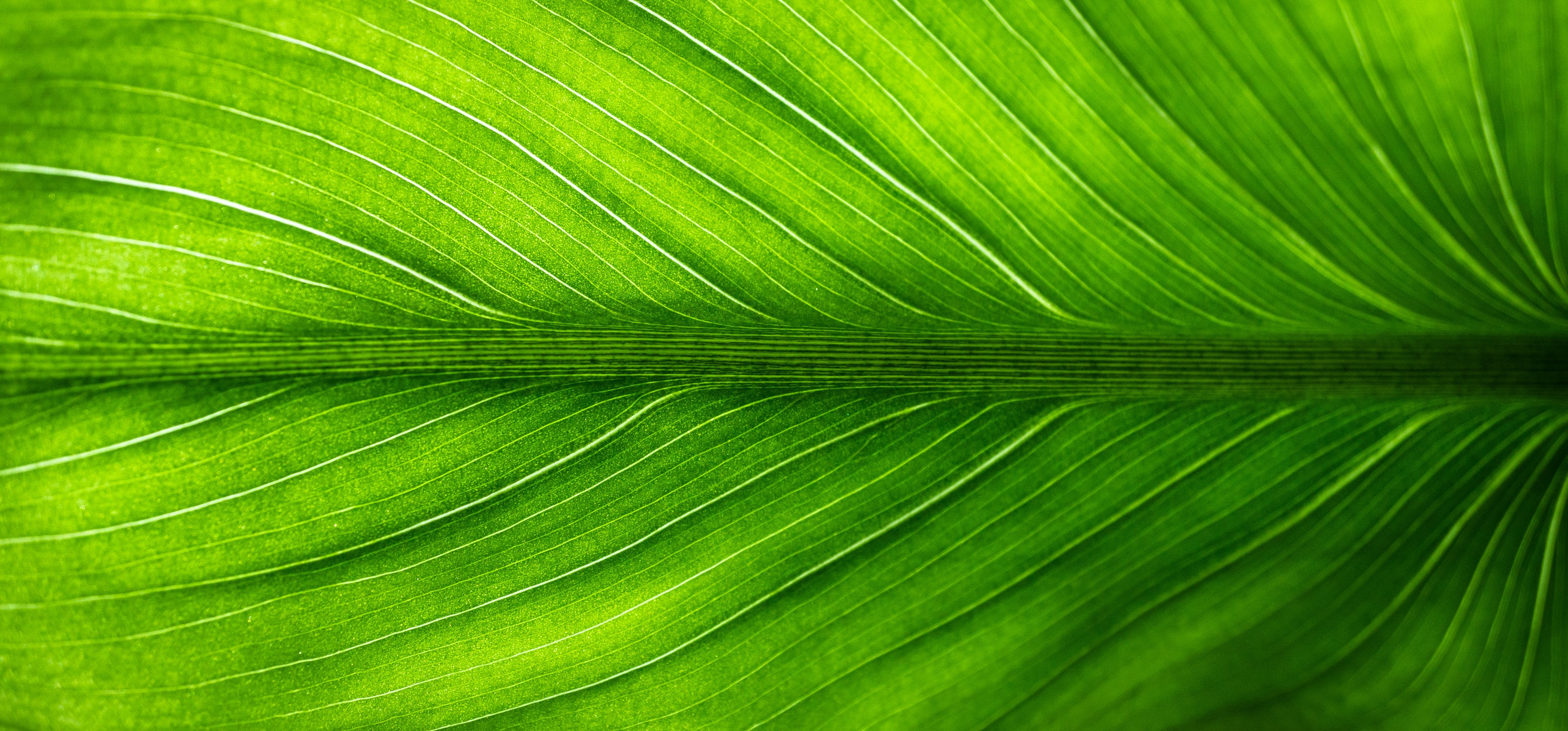 Free stock photo of nature, forest, abstract, leaf