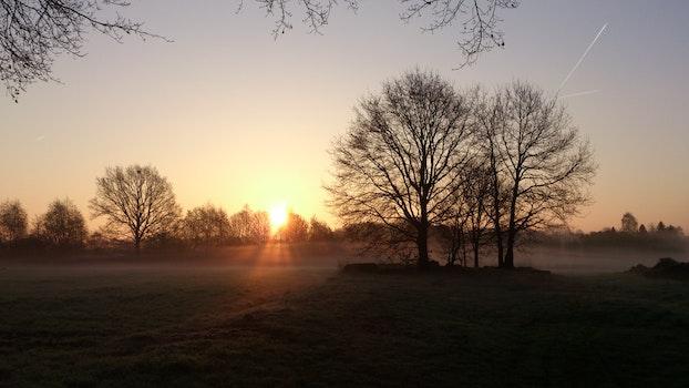 Free stock photo of landscape, nature, trees, sunrise
