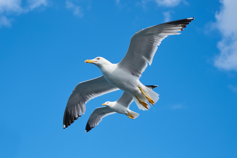Free stock photo of landscape, nature, sky, bird
