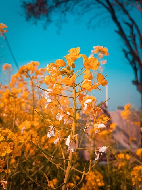 Foto stok gratis bunga, bunga-bunga, cyan