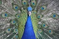bird, blue, pattern