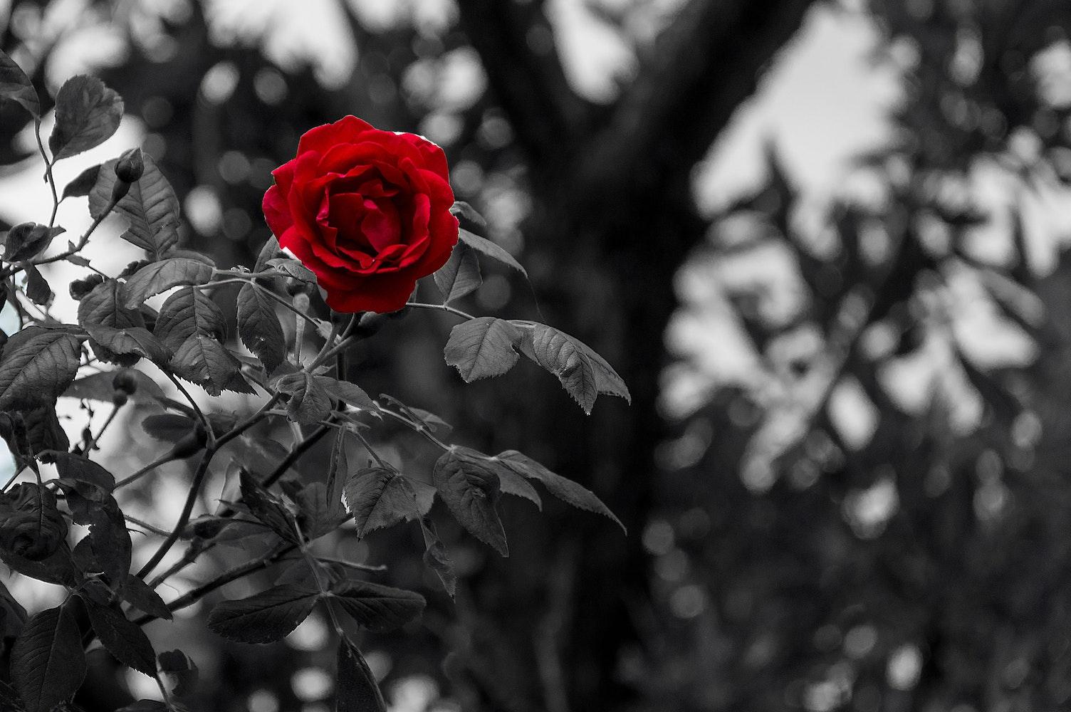 free black and white photography 183 pexels 183 free stock photos