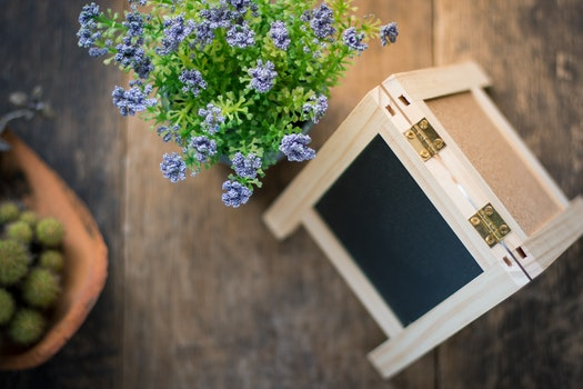 Free stock photo of wood, flowers, purple, petals