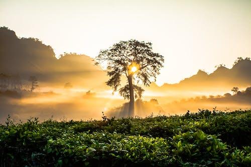 Tree of Life Overseeing Sun Rays