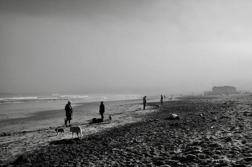 People walking with dogs on seashore