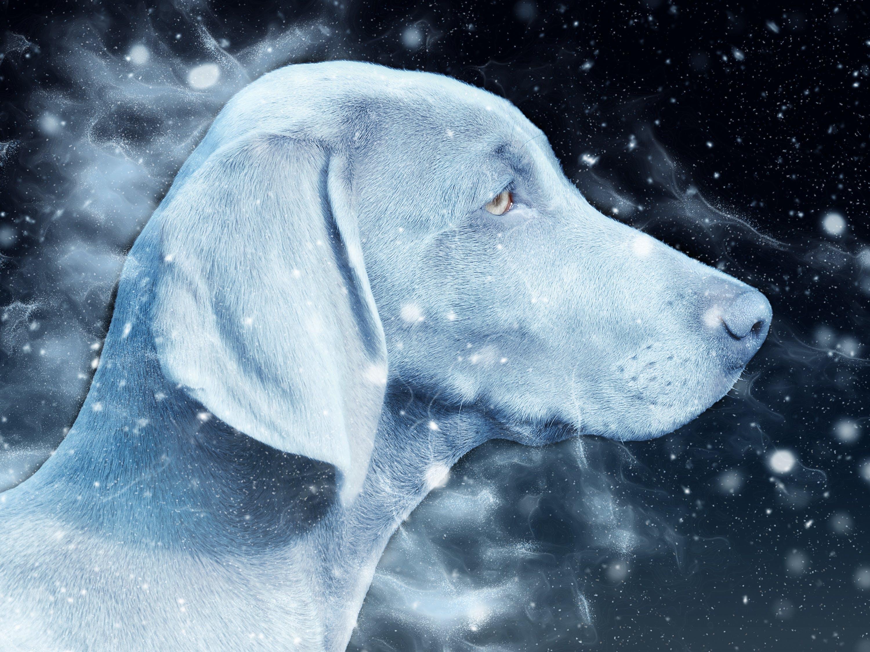 Free stock photo of snow, nature, art, texture