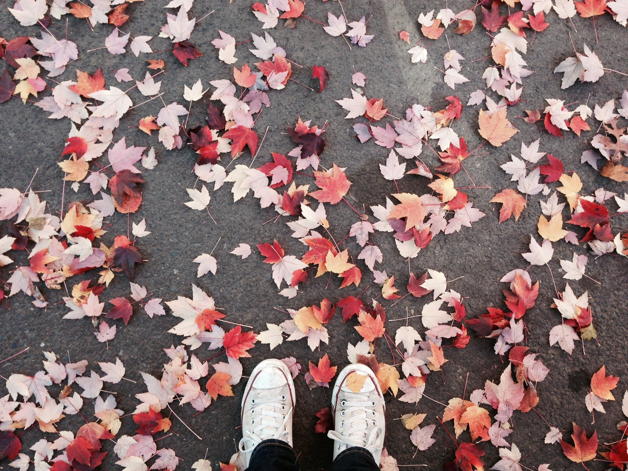 Person Standing on Top of Red and White Leaves