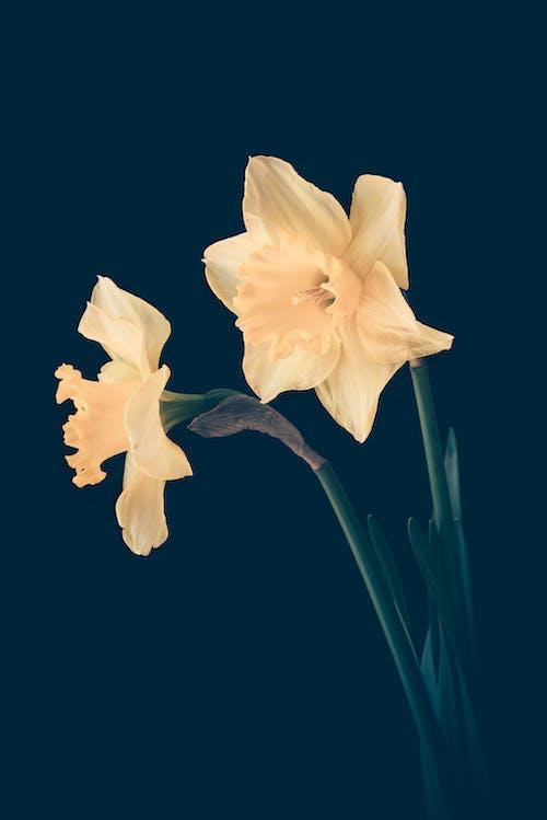 Ingyenes stockfotó közelkép, növekedés, növényvilág, sárga virágok témában