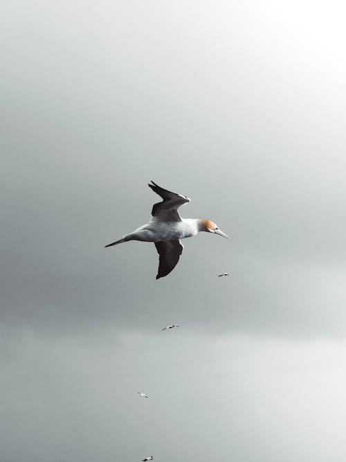 Ilmainen kuvapankkikuva tunnisteilla eläin, lentäminen, lintu, lintu lentää