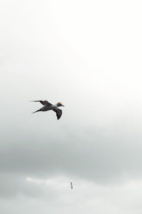 Bird Flying in Overcast Sky