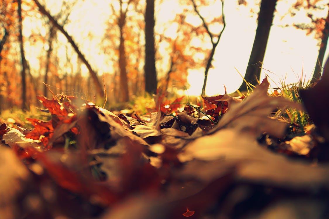 chão, folhagem, folhas de outono