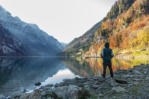 Photos gratuites de arbre, automne, aventure, bois