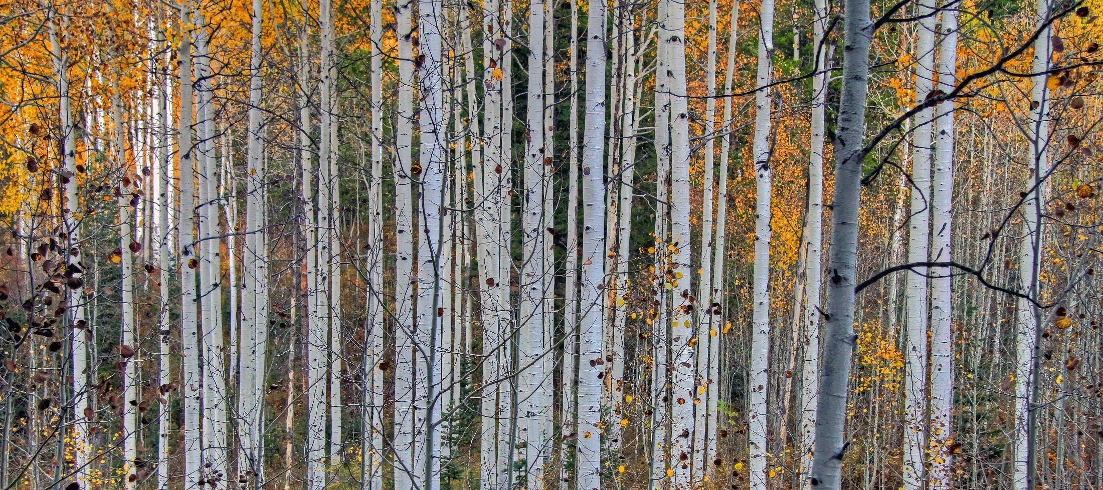 ágak, erdő, fák