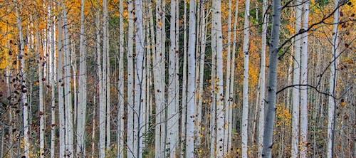 ağaç gövdeleri, ağaçlar, bakir bölge, çevre içeren Ücretsiz stok fotoğraf
