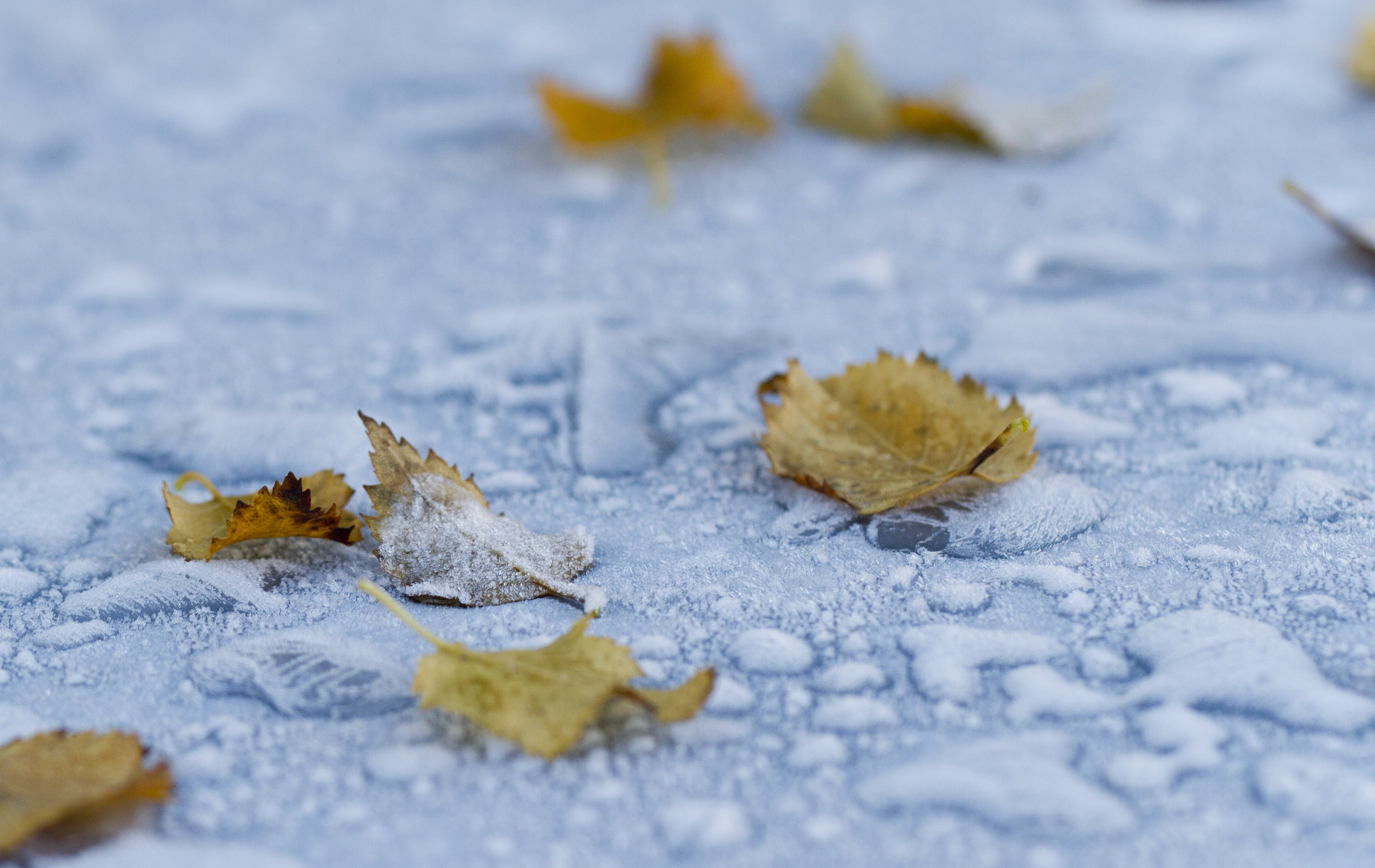 Free stock photo of cold, freeze, frost, frosted