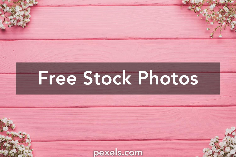 1000 Great Pink Flower Photos Pexels Free Stock Photos
