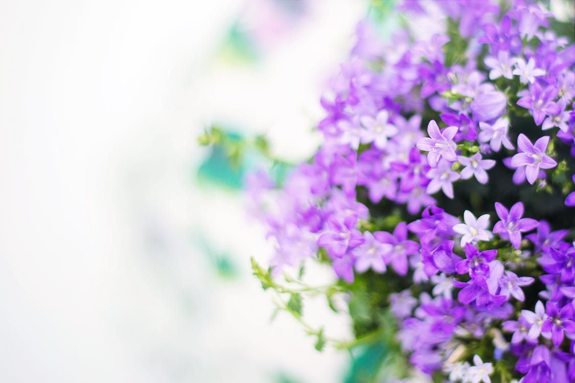 Selective Focus Photo of White and Purple Flowers