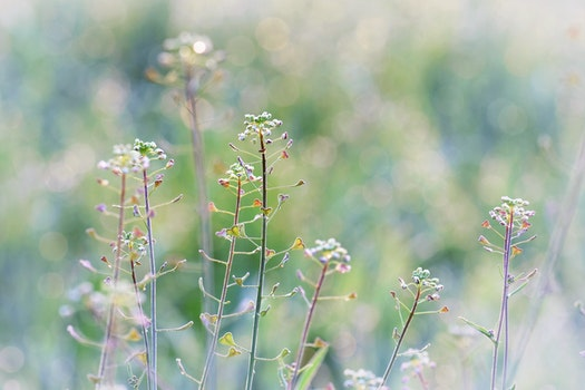 Free stock photo of nature, field, flowers, blur