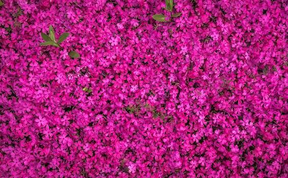1000 beautiful spring flowers photos pexels free stock photos free stock photo of nature flowers pattern purple mightylinksfo