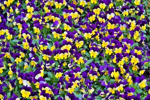 Бесплатное стоковое фото с ботанический, желтый, заводы, красивый