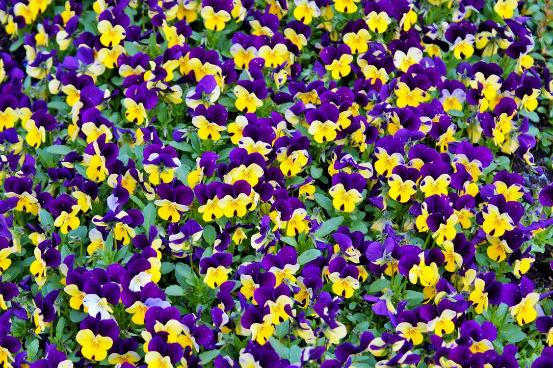 botanický, detailný záber, farba