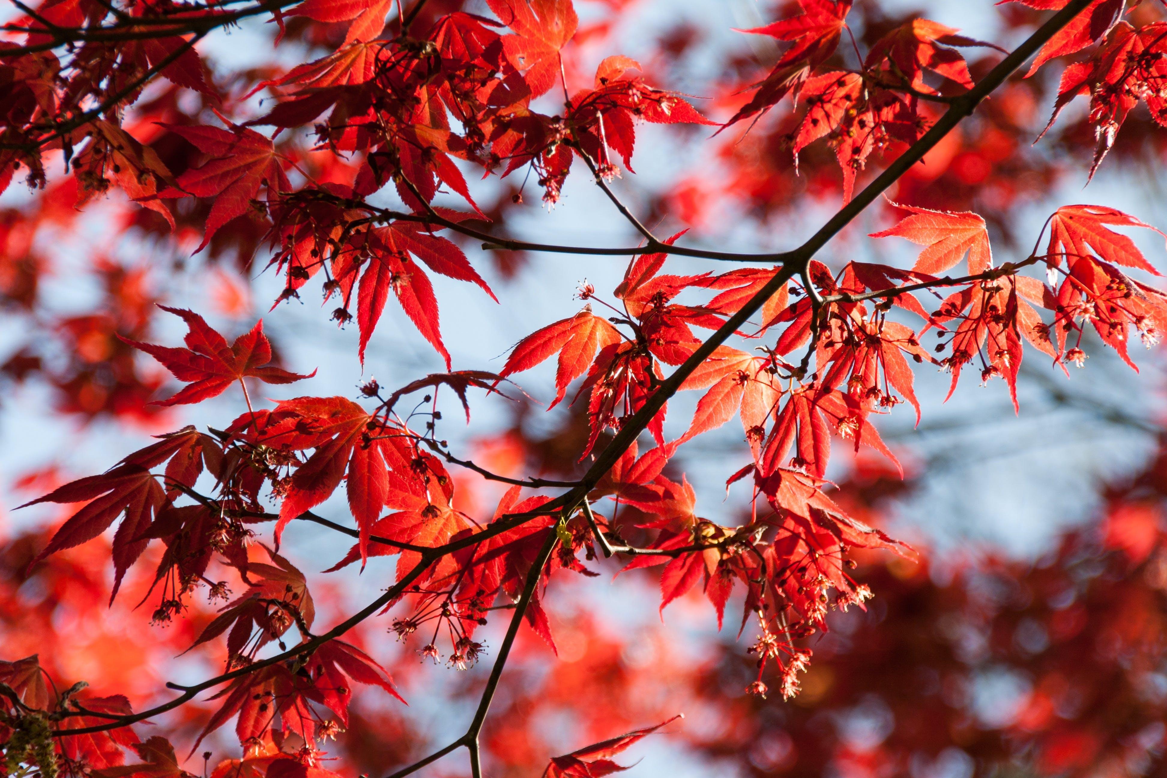 Ảnh lưu trữ miễn phí về cận cảnh, cây, gỗ, hệ thực vật