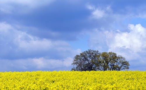 Imagine de stoc gratuită din albastru, arbore, câmp, centrale