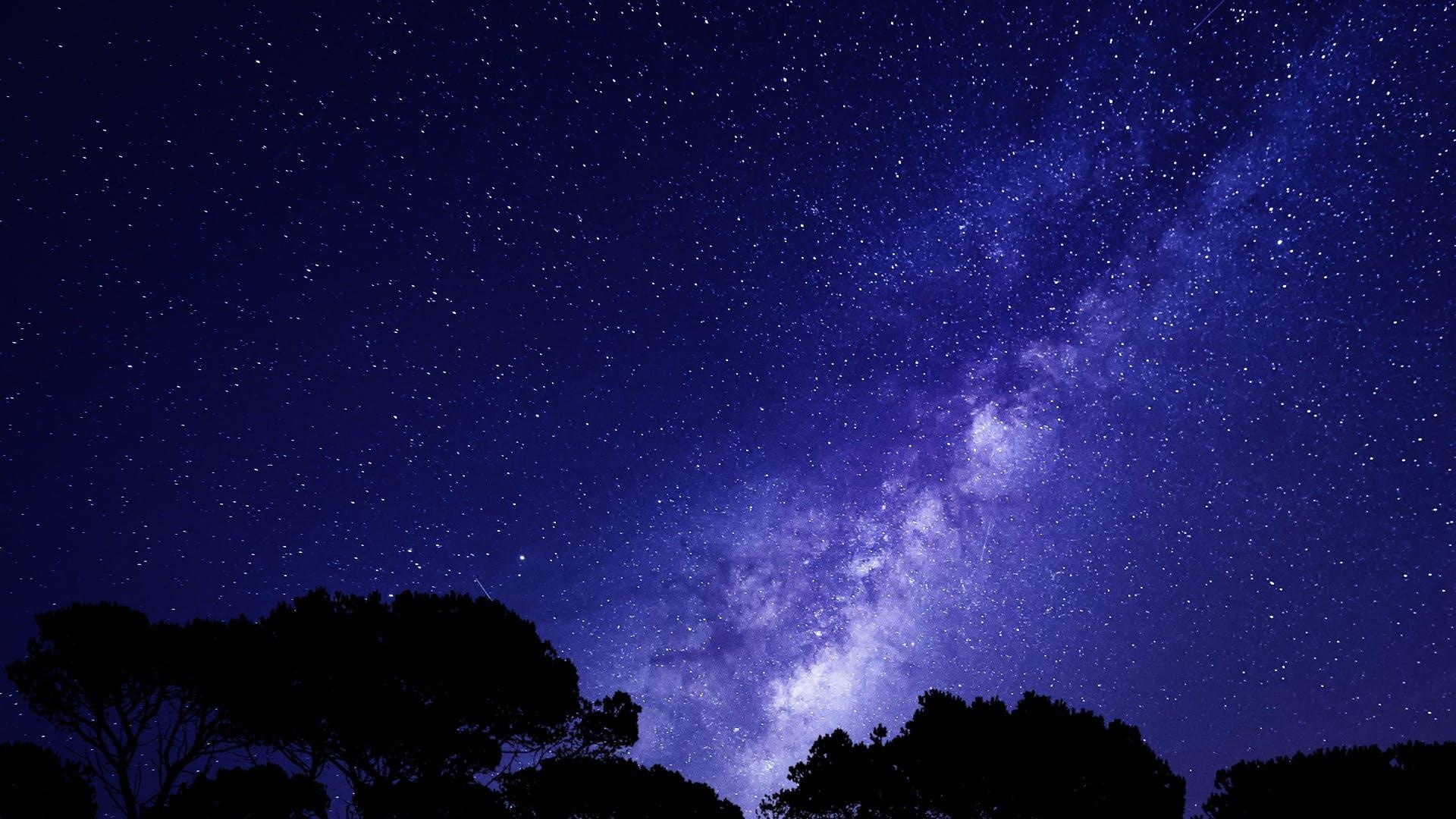 Kostenloses Stock Foto zu abend, bäume, draußen, dunkel