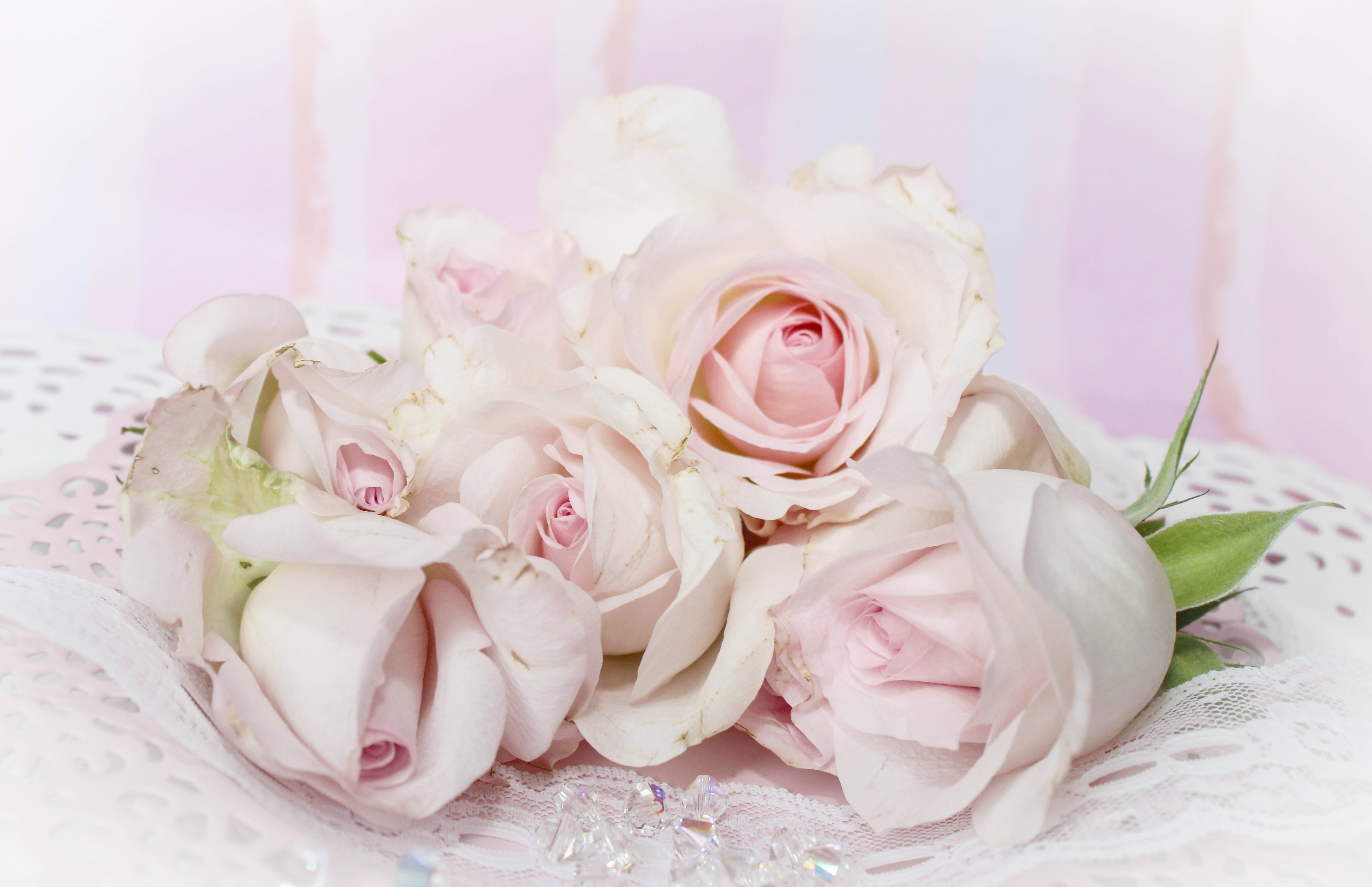 Free stock photo of romantic, vintage, roses, pink