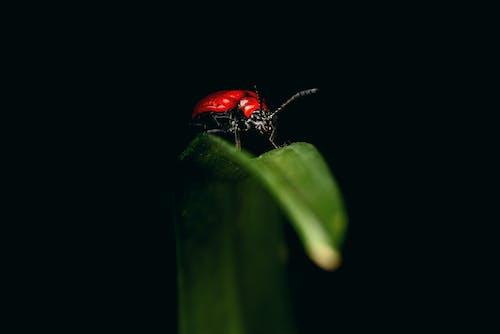 Безкоштовне стокове фото на тему «Beetle, антена, біологія, дика природа»