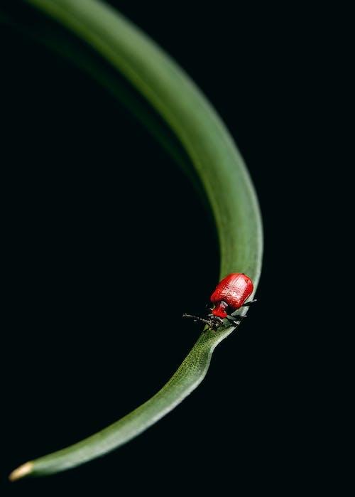 Безкоштовне стокове фото на тему «Beetle, антена, Безхребетні, біологія»