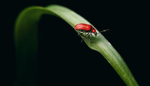 Darmowe zdjęcie z galerii z antena, bilon, biologia, chrząszcz