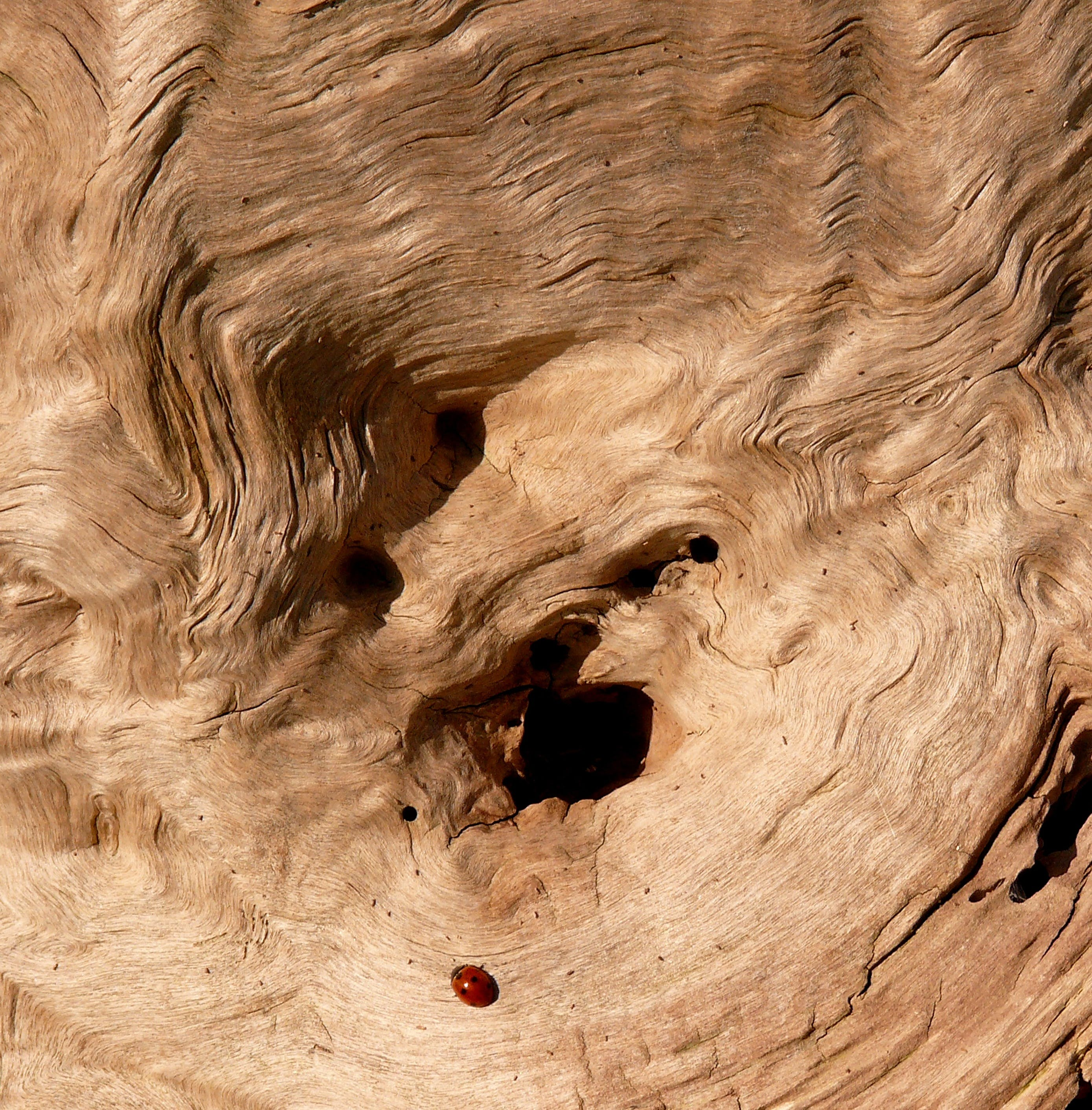 Free stock photo of bark, black, color, dead tree